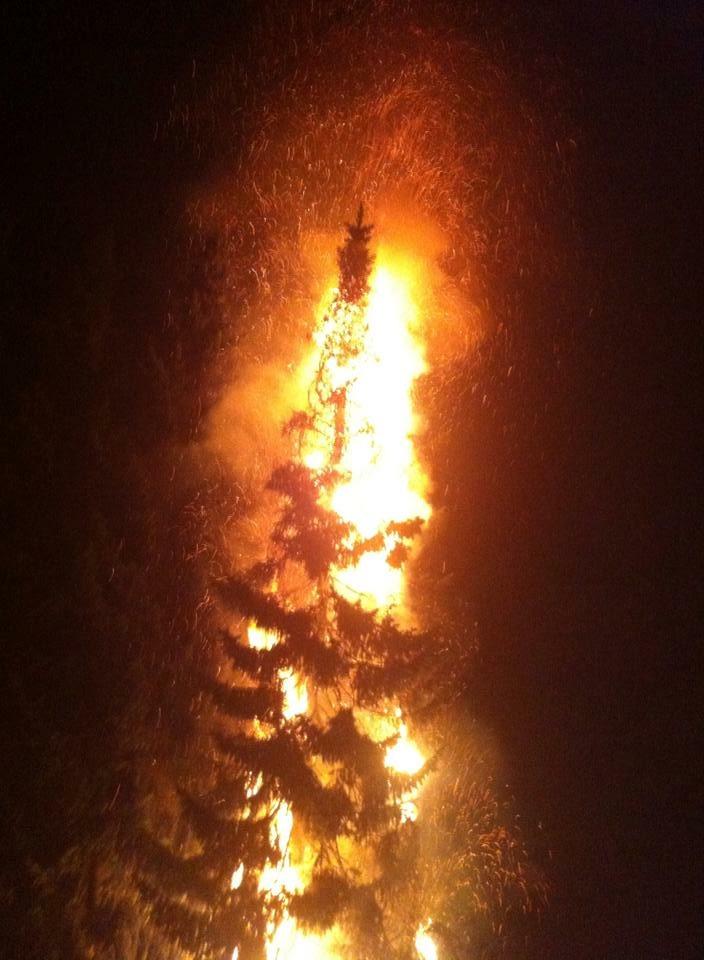 Einsatz – Brennender Baum im Garten